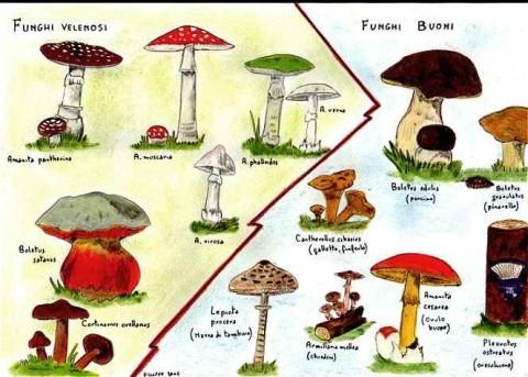 funghi_velenos