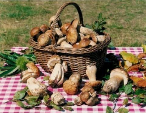 tesserino_raccolta_funghi_raccolti